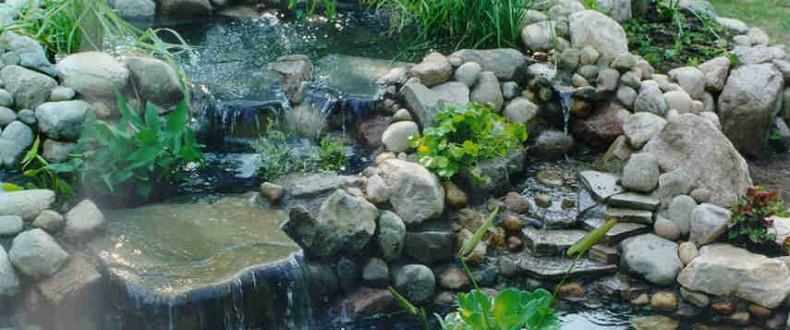 Pond17 1